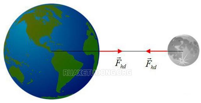 Trọng lực là gì? Lực hấp dẫn là gì? – Công thức tính, đơn vị đo