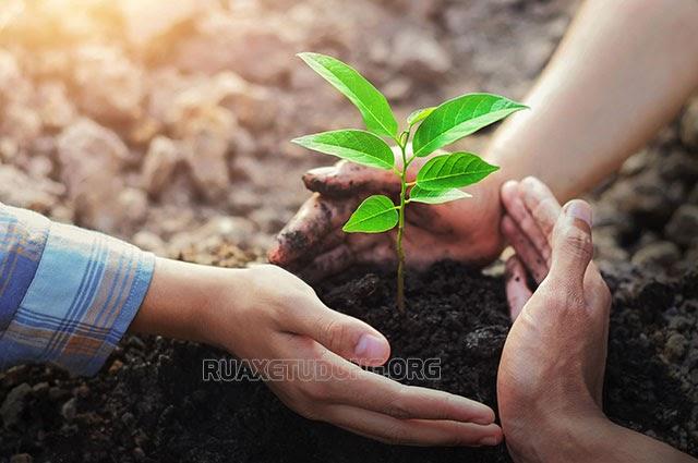 trồng cây gây rừng